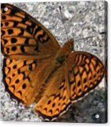 Great Spangled Fritterlary Acrylic Print