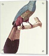 Great Touraco Acrylic Print