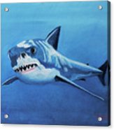 Great White 2 Acrylic Print