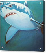 Great White 3 Acrylic Print