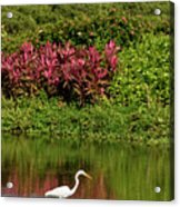 Great White Egret Fishing In A Pond With Tropical Plants And Sie Acrylic Print