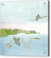 Great White Heron 1 Roger Bansemer Acrylic Print