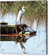 Great White On Row Boat Acrylic Print