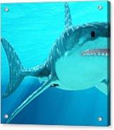 Great White Shark With Sunrays Acrylic Print