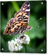 Great Wings Acrylic Print