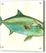 Greater Amberjack Fish Acrylic Print