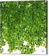Green #001 Acrylic Print