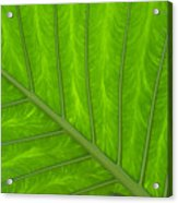 Green Abstract No. 4 Acrylic Print