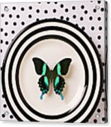 Green And Black Butterfly On Plate Acrylic Print