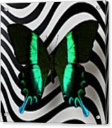 Green And Black Butterfly On Wavey Lines Acrylic Print