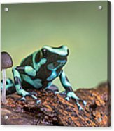 Green And Black Poison Dart Frog Acrylic Print