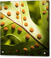Green And Orange Leaf Acrylic Print