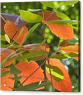 Green And Orange Leaves Acrylic Print