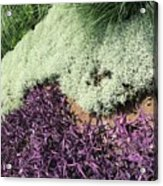Green And Purple Acrylic Print