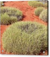 Green On Rusty Red Acrylic Print