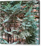 Green And Red - Slender Cypress Branches Over Rough Roman Brick Wall Acrylic Print