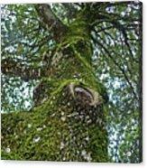 Green Arms Acrylic Print