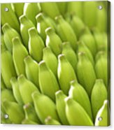 Green Banana Bunch Acrylic Print