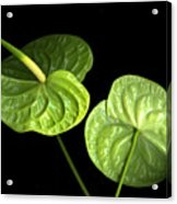 Green Berets Acrylic Print