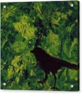 Green Bird Acrylic Print