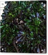 Green-black Cucculent Plant. Big Bush Acrylic Print