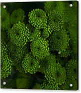 Green Brothers Acrylic Print