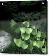 Green Butterflies  Acrylic Print