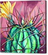 Green Cactus  Acrylic Print
