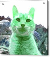 Green Cat Acrylic Print