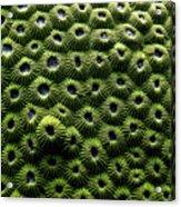 Green Coral Acrylic Print