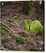 Green Covered Rock Acrylic Print