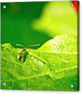 Green Creature On A Broad Leaf. Acrylic Print