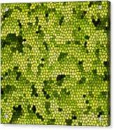 Green Curtain Acrylic Print