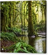 Green Everywhere Acrylic Print