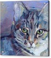 Green Eyed Tabby - Thomasina Acrylic Print by Kimberly Santini