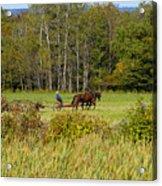 Green Farming Acrylic Print