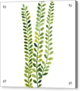 Green Fern Watercolor Minimalist Painting Acrylic Print