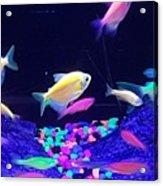 Green Fish Yellow Fish 123 Acrylic Print