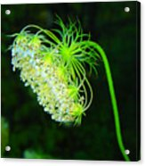 Green Flower Acrylic Print