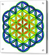 Green Flower Of Life Acrylic Print