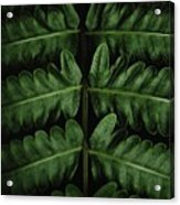 Green Foilage Of Indonesia Acrylic Print