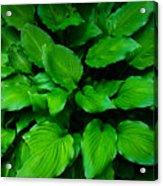 Green Foliage Acrylic Print