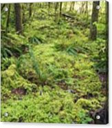 Green Foliage On The Forest Floor Acrylic Print