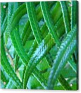 Green Forest Fern Fronds Art Prints Baslee Troutman Acrylic Print