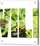 Green Frog In A Wetland Acrylic Print