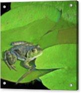 Green Frog Acrylic Print