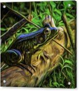 Green Frog On A Brown Log Acrylic Print