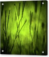 Green Grass Grow Glow Acrylic Print