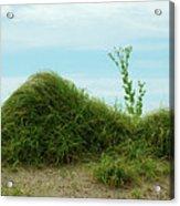 Green Grass Mountain Acrylic Print