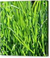 Green Grass Acrylic Print